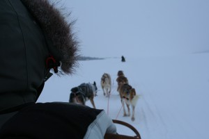 Dog Sledge in Swedish Lapland.