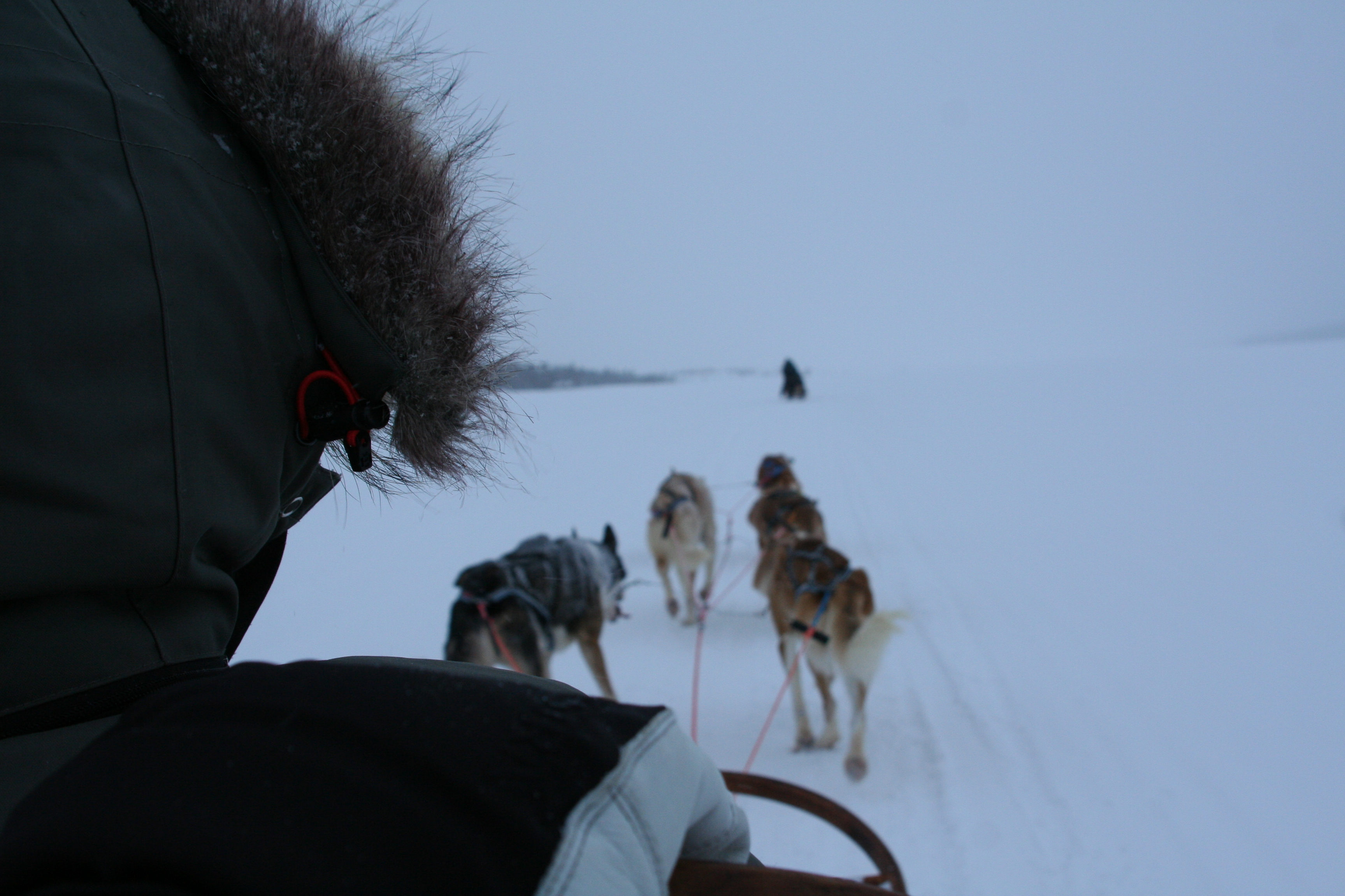 Dog sledge tour in the winter kingdome of Swedish Lapland.